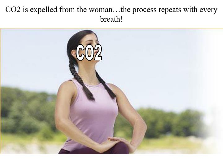 CO2 is expelled from the woman…the process repeats with every breath!