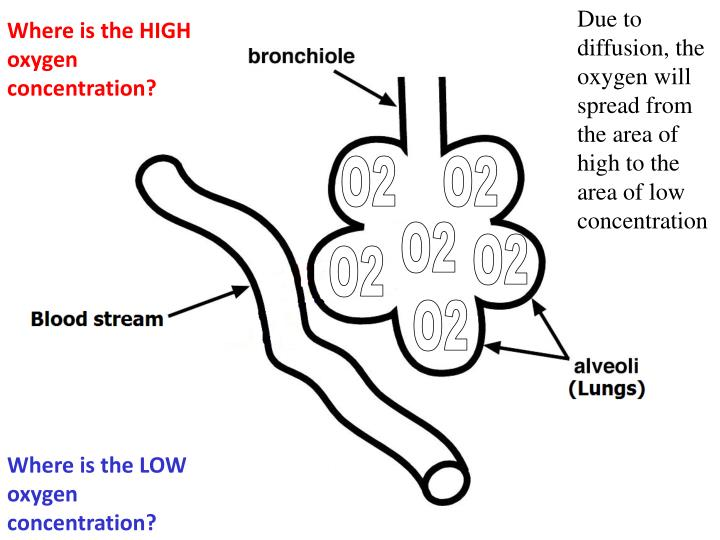 Due to diffusion, the oxygen will spread from the area of high to the area of low concentration