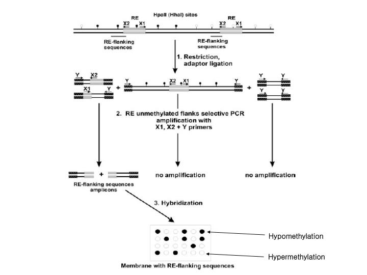 Hypomethylation