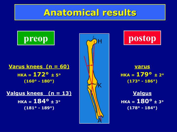 Anatomical results