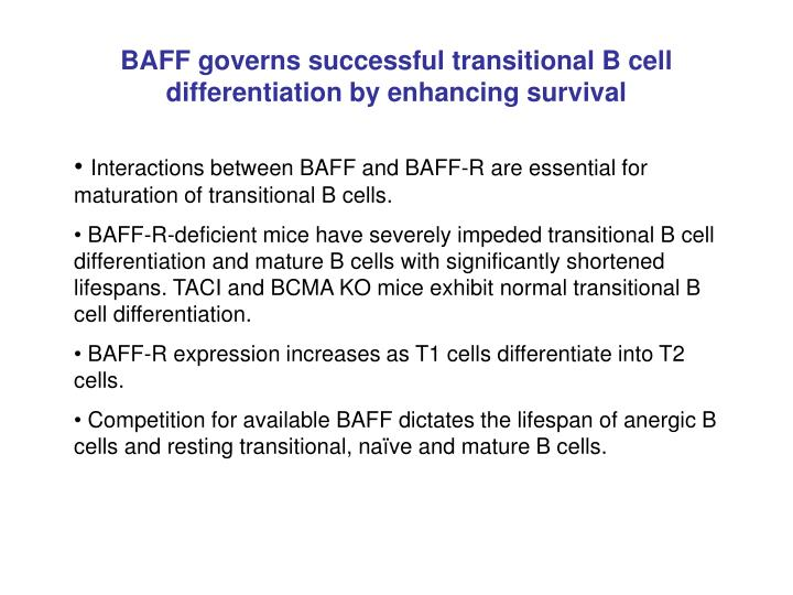 BAFF governs successful transitional B cell differentiation by enhancing survival