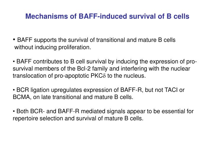 Mechanisms of BAFF-induced survival of B cells