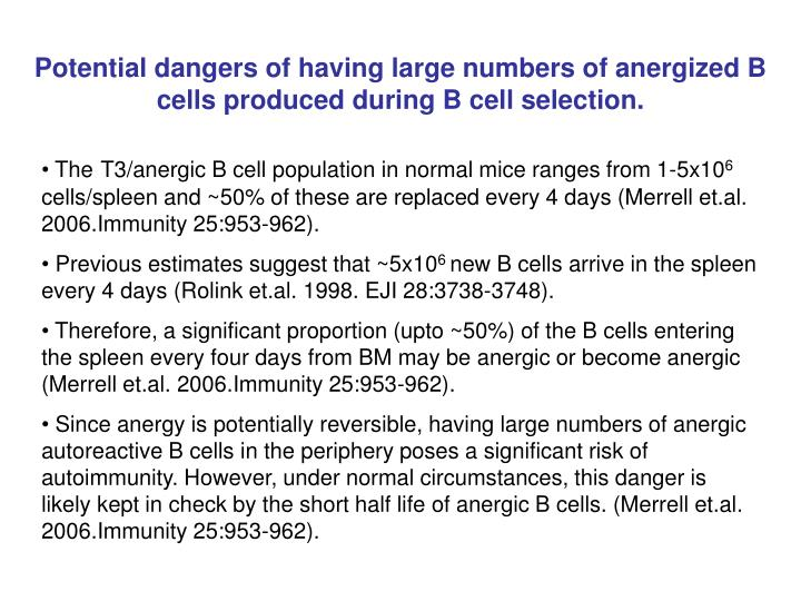 Potential dangers of having large numbers of anergized B cells produced during B cell selection.