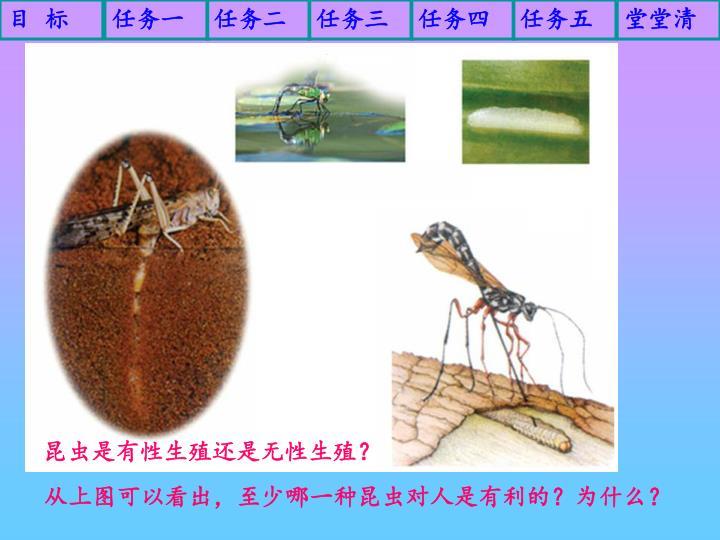 昆虫是有性生殖还是无性生殖?