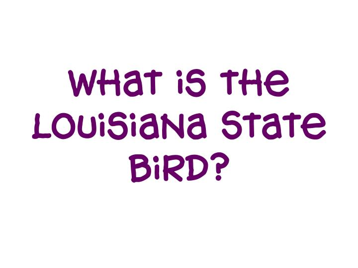 What is the Louisiana State bird?