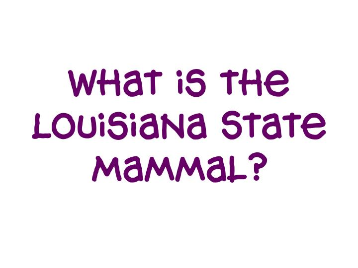 What is the Louisiana State Mammal?