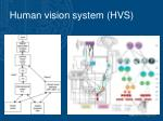 human vision system hvs