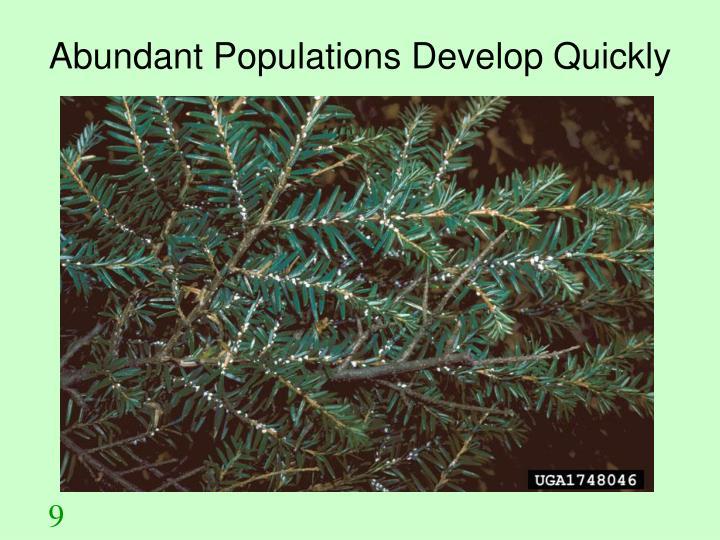 Abundant Populations Develop Quickly