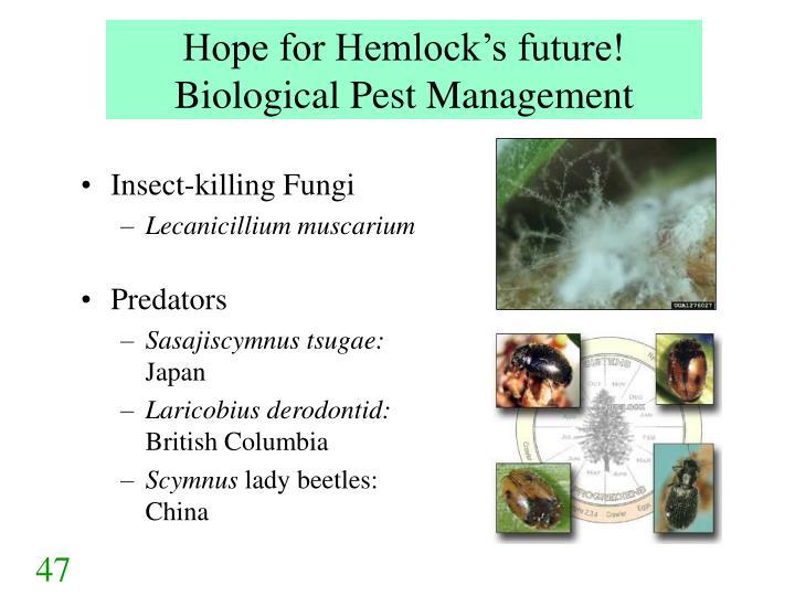 Hope for Hemlock's future!