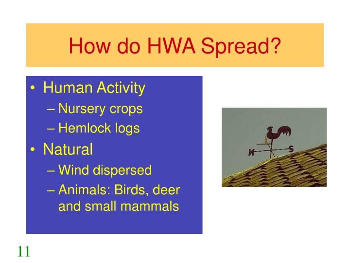 How do HWA Spread?