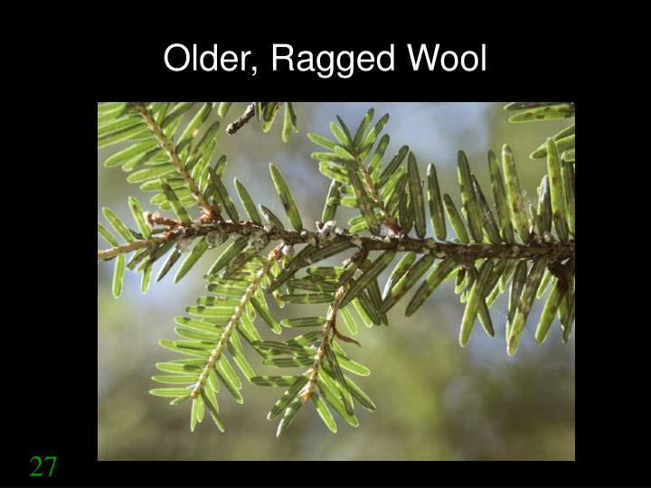 Older, Ragged Wool