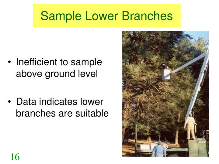 Sample Lower Branches