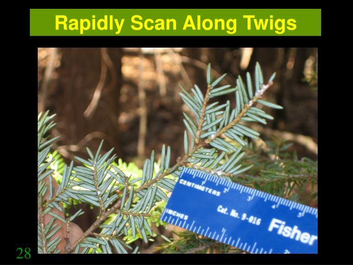 Rapidly Scan Along Twigs