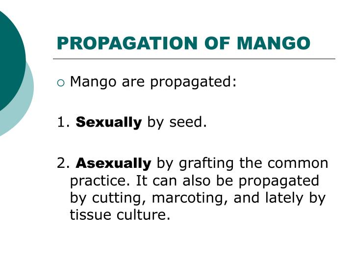 PROPAGATION OF MANGO