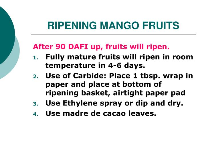RIPENING MANGO FRUITS