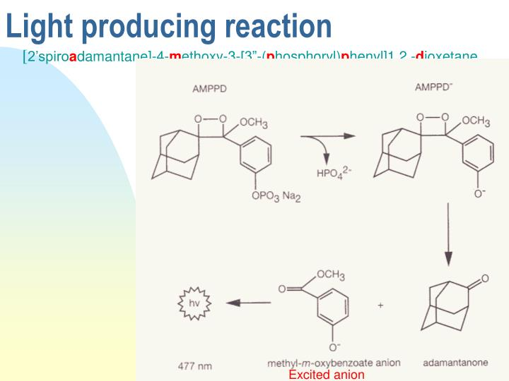 Excited anion