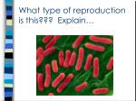 what type of reproduction is this explain2