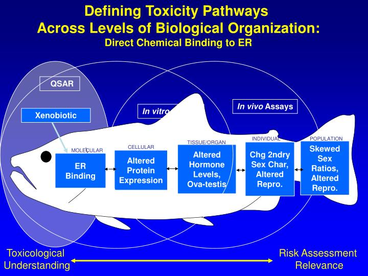 Defining Toxicity Pathways