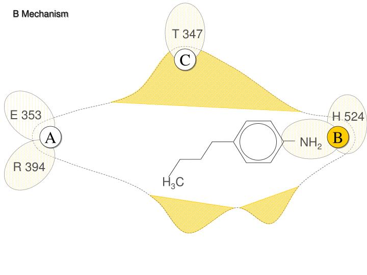 B Mechanism