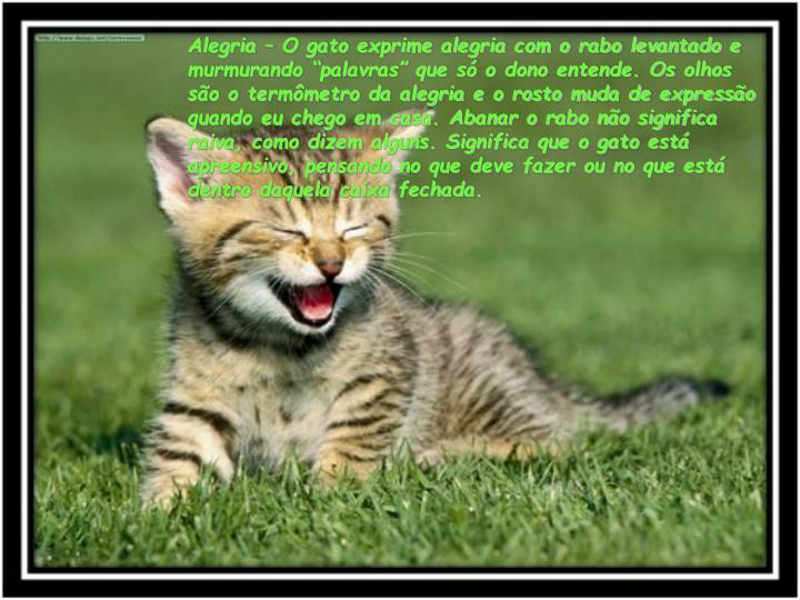 """Alegria – O gato exprime alegria com o rabo levantado e murmurando """"palavras"""" que só o dono entende. Os olhos são o termômetro da alegria e o rosto muda de expressão quando eu chego em casa. Abanar o rabo não significa raiva, como dizem alguns. Significa que o gato está apreensivo, pensando no que deve fazer ou no que está dentro daquela caixa fechada."""