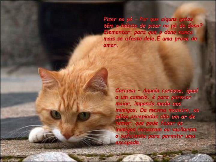 Pisar no pé – Por que alguns gatos têm o hábito de pisar no pé do dono? Elementar: para que o dono nunca mais se afaste