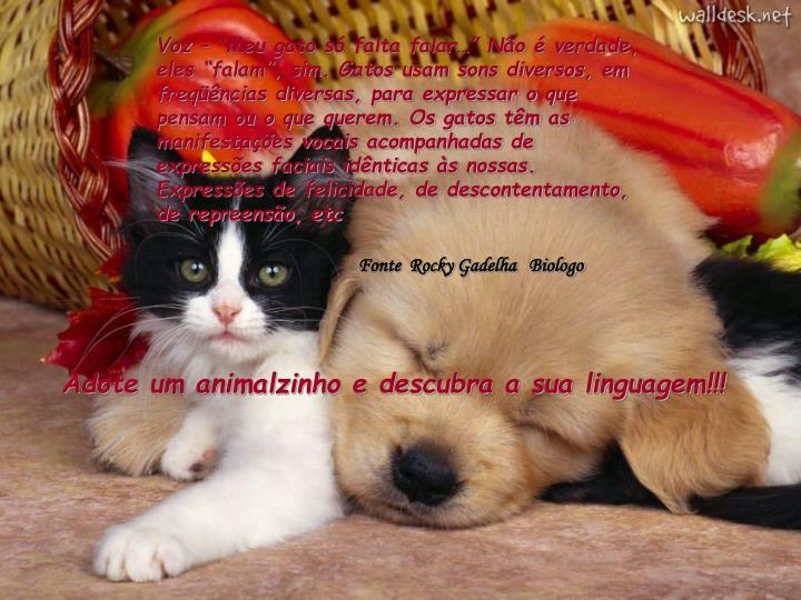 """Voz – """"Meu gato só falta falar…"""" Não é verdade, eles """"falam"""", sim. Gatos usam sons diversos, em freqüências diversas, para expressar o que pensam ou o que querem. Os gatos têm as manifestações vocais acompanhadas de expressões faciais idênticas às nossas. Expressões de felicidade, de descontentamento, de repreensão, etc"""