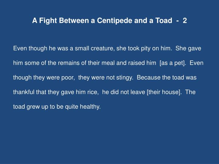 A Fight Between a Centipede and a Toad  -  2