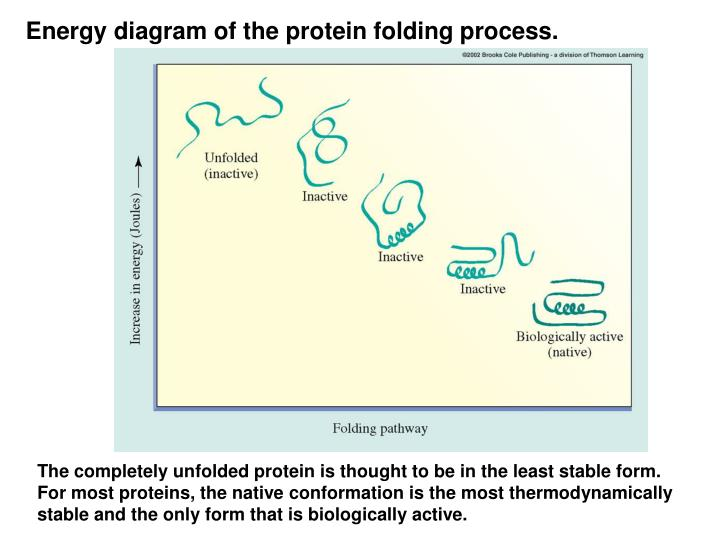 Energy diagram of the protein folding process.