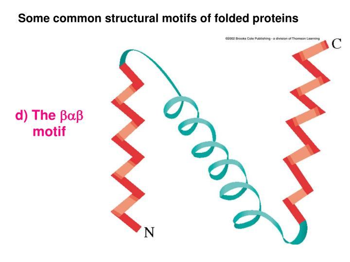 Some common structural motifs of folded proteins