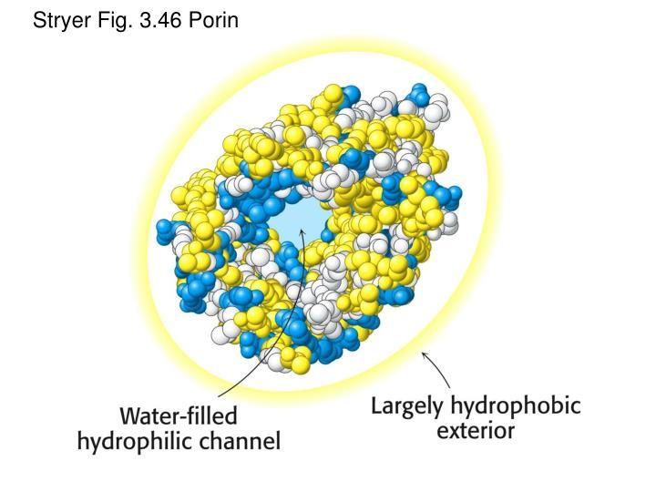 Stryer Fig. 3.46 Porin