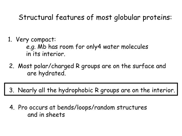 Structural features of most globular proteins: