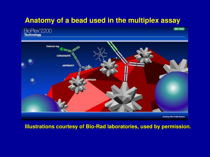 Anatomy of a bead used in the multiplex assay