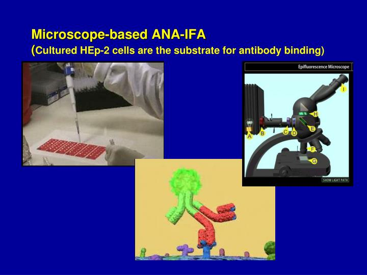 Microscope-based ANA-IFA