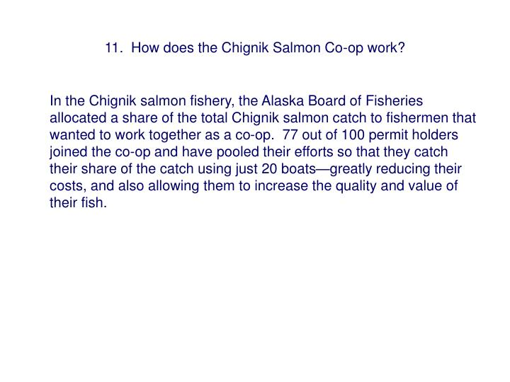 11.  How does the Chignik Salmon Co-op work?