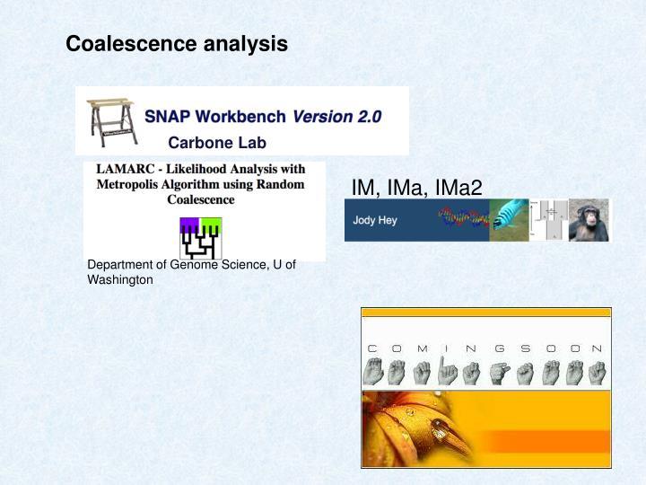 Coalescence analysis