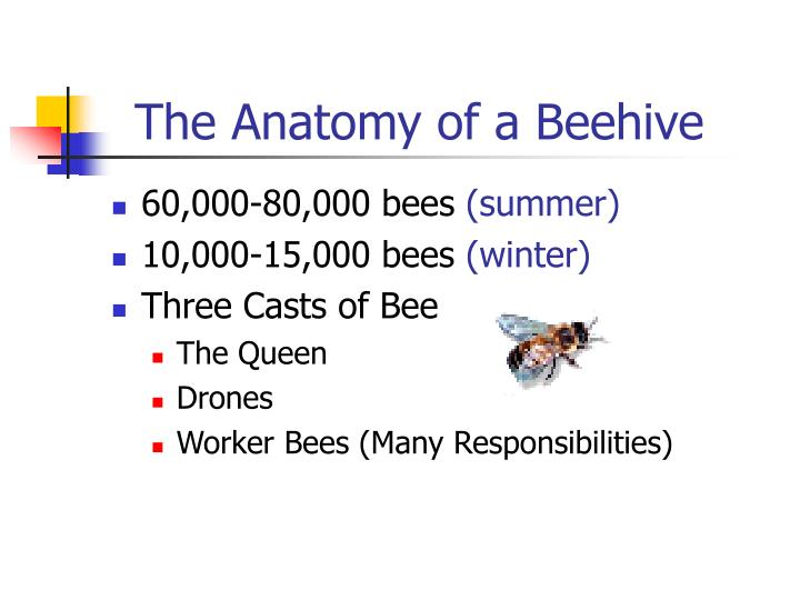 The Anatomy of a Beehive