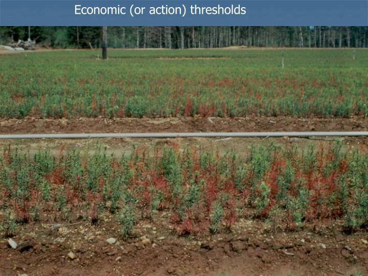 Economic (or action) thresholds