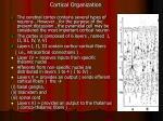 cortical organization