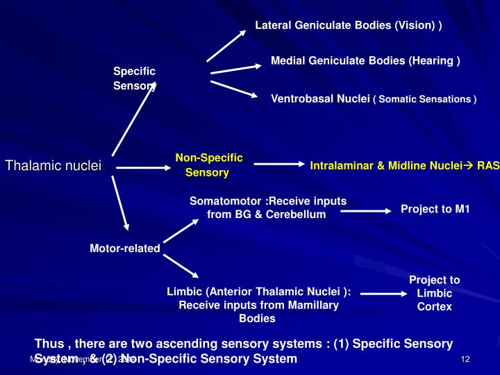 Lateral Geniculate Bodies (Vision) )