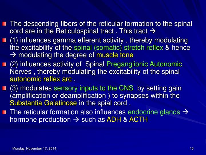 The descending fibers of the reticular formation to the spinal cord are in the Reticulospinal tract . This tract