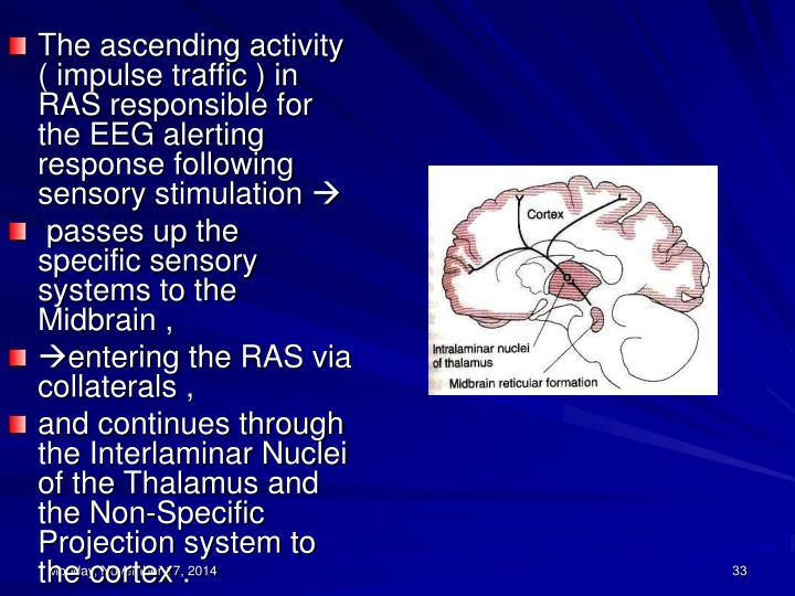 The ascending activity ( impulse traffic ) in RAS responsible for the EEG alerting response following sensory stimulation