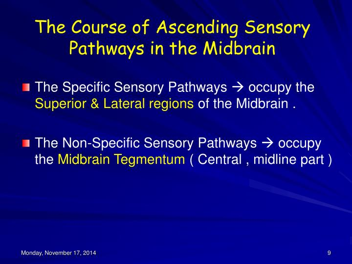 The Course of Ascending Sensory Pathways in the Midbrain