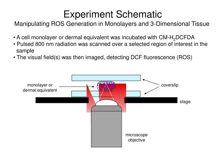 Experiment Schematic