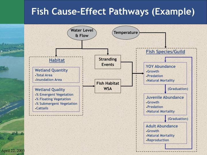 Fish Cause-Effect Pathways (Example)
