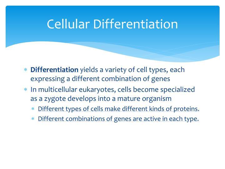 Cellular Differentiation