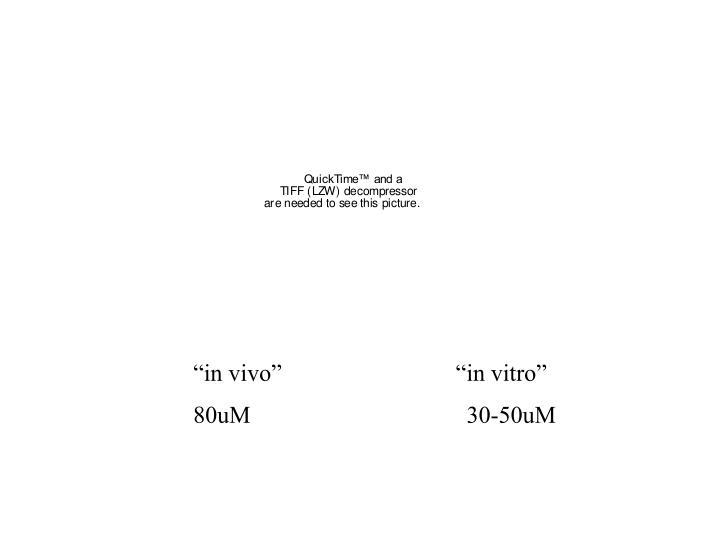 """""""in vivo""""                             """"in vitro"""""""