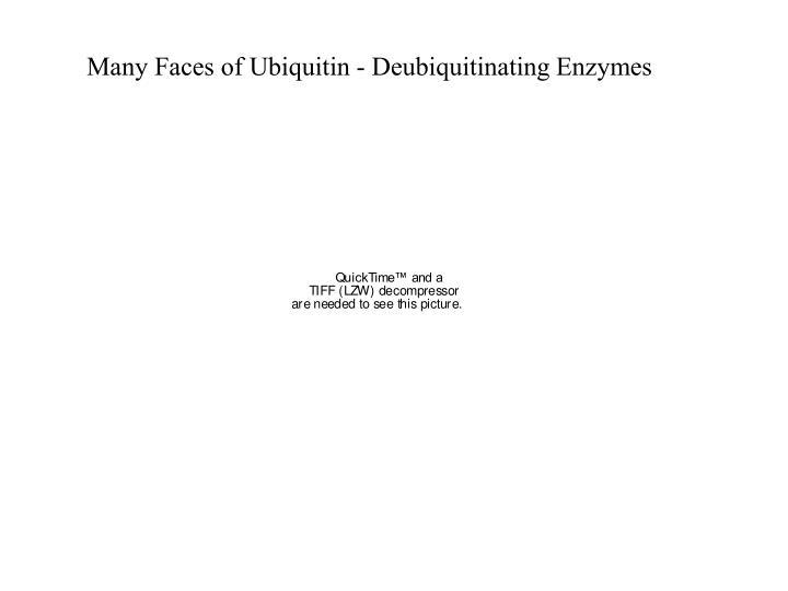 Many Faces of Ubiquitin - Deubiquitinating Enzymes