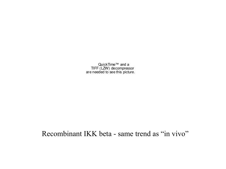 """Recombinant IKK beta - same trend as """"in vivo"""""""