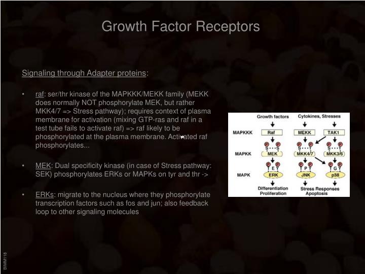 Growth Factor Receptors