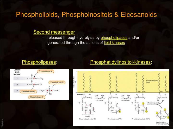 Phospholipids, Phosphoinositols & Eicosanoids